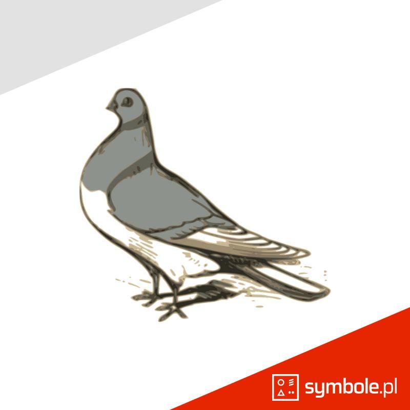 gołąb symbol